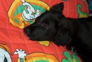 Bonny sulla coperta di Snoopy :)