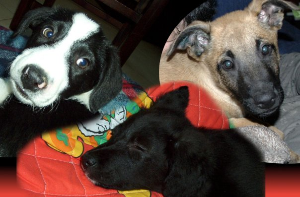 Bonny, Polpetta ed Echo