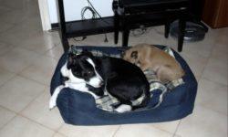 La scelta del cane - cucciolo o adulto