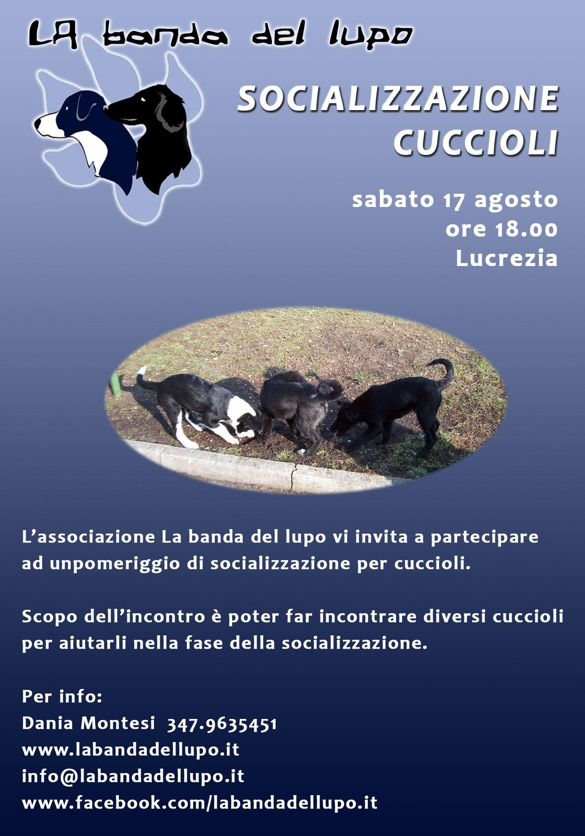 Socializzazione cuccioli - agosto 2013