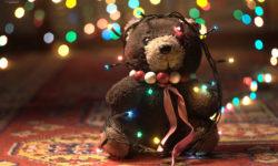 Natale e i pericoli per i nostri animali