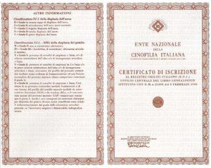 Esempio di pagina esterna di pedigree italiano rilasciato dall'ENCI